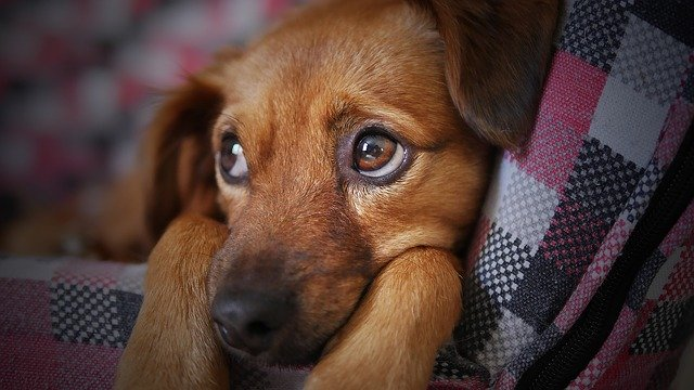 islandske hundenavn